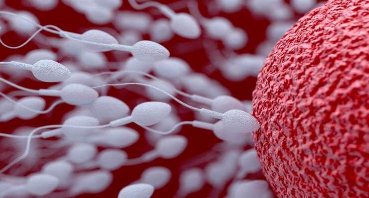 Лечение инсеминацией (внутриматочной)