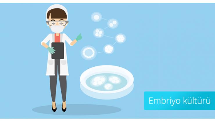 Embriyo kültürü